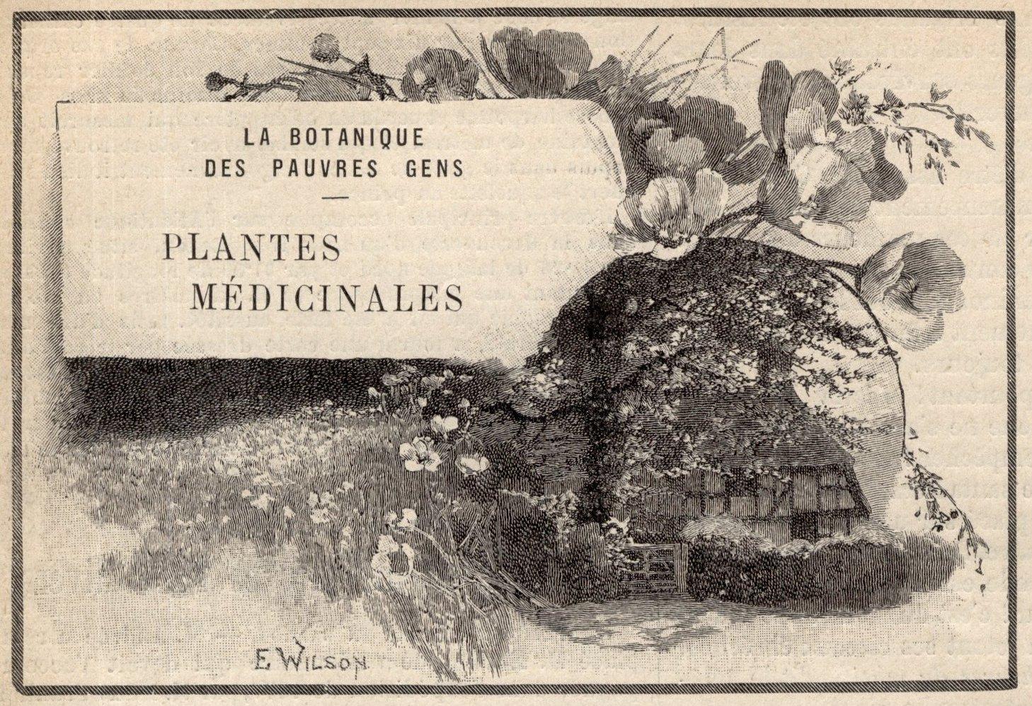 connaissance des plantes médicinales