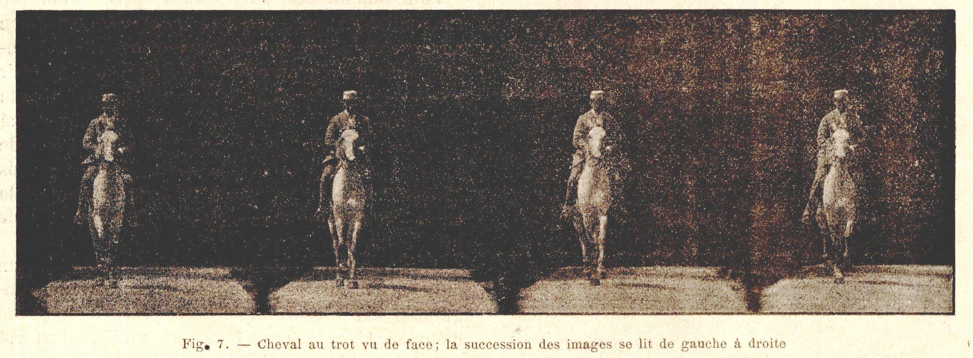 trot cheval français