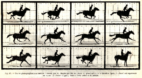 Douzes photographies successives obtenues par M. Muybridge sur un cheval au grand galop